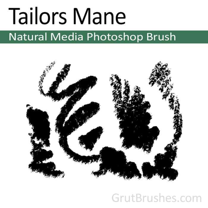 'Tailors Mane' Photoshop Pastel Brush